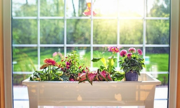 Window Box – Small Change with Big Impact